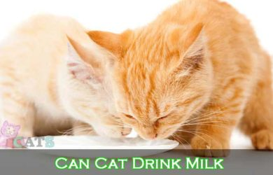 Can Cat Drink Milk