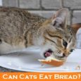 Can Cats Eat Bread?
