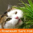 Is Rosemary Safe for Cats?