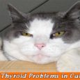 Thyroid Problems in Cats