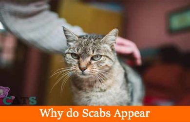 Scabs on Cat
