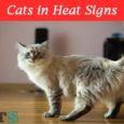 cats in Heat signs