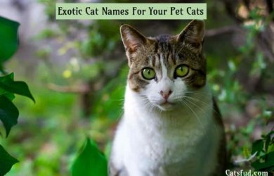 exotic cat names