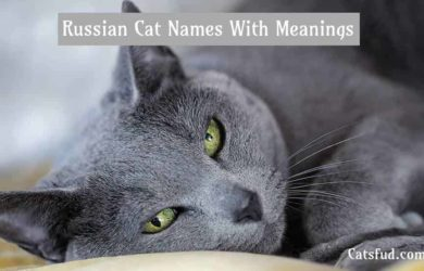 russian cat names
