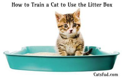 How to Train a Cat to Use the Litter Box