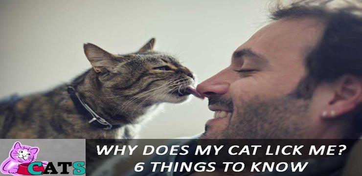 Why Does My Cat Lick Me