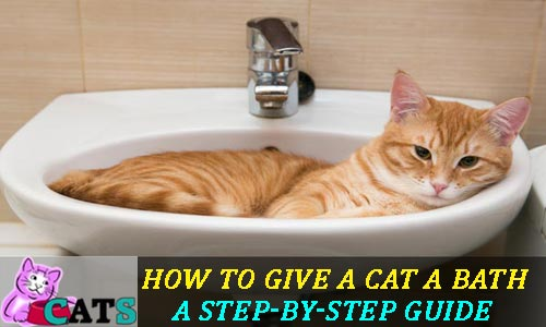 How to Give a Cat a Bath