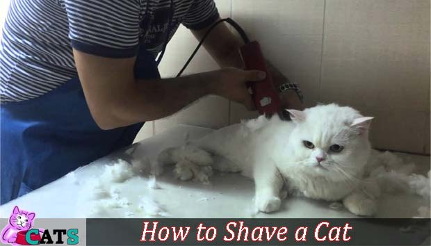 How to Shave a Cat