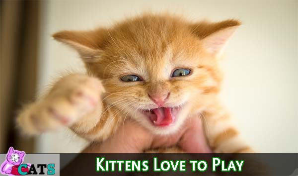 Kittens Love to Play
