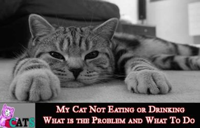 My Cat Not Eating or Drinking
