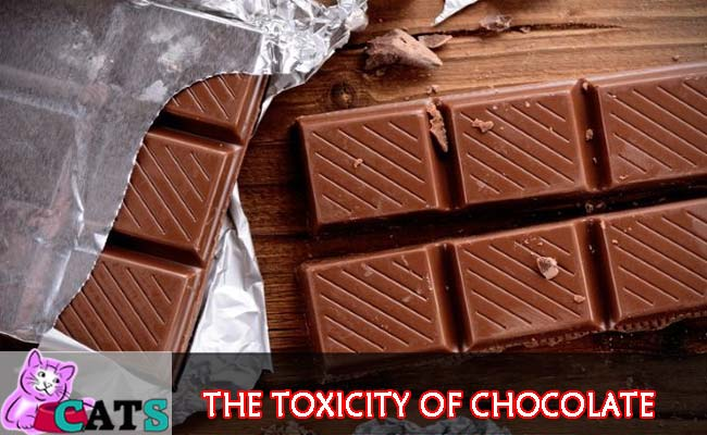 The toxicity of chocolate