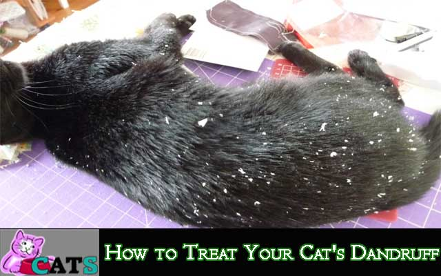 How to Treat Your Cat's Dandruff