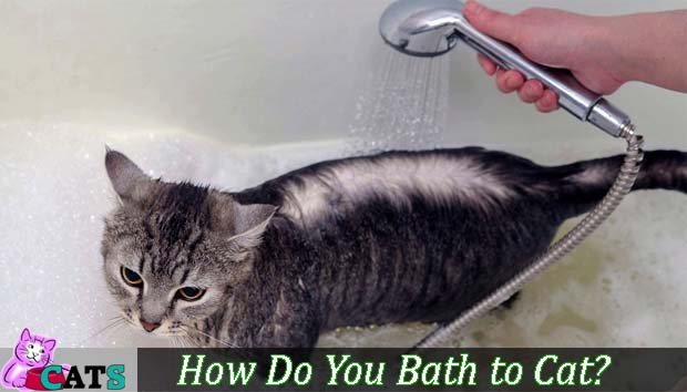 How Do You Bath Cat