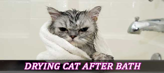 Drying Cat After Bath