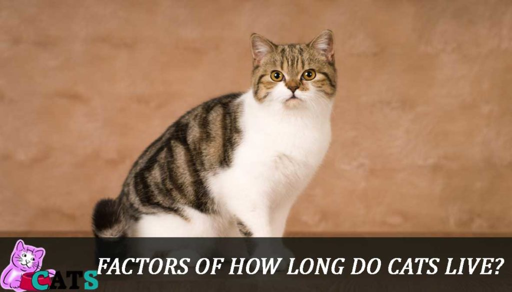 Factors Of How long do cats live