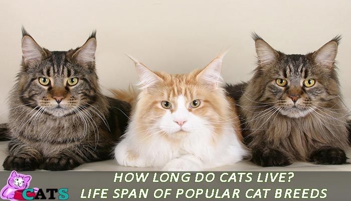 How long do cats live