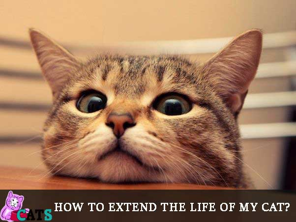 How to extend the life of my cat