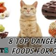 Dangerous Foods for Cats