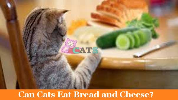 Can Cats Eat Bread and Cheese