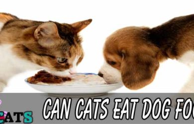 Can Cats Eat Dog Food