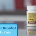 Can you give a Benadryl Cat