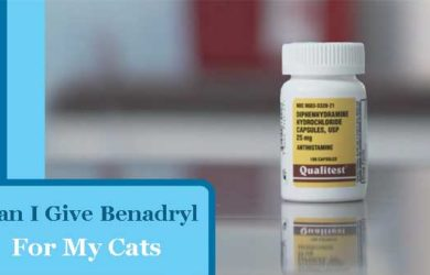 Can you give a Benadryl Cat