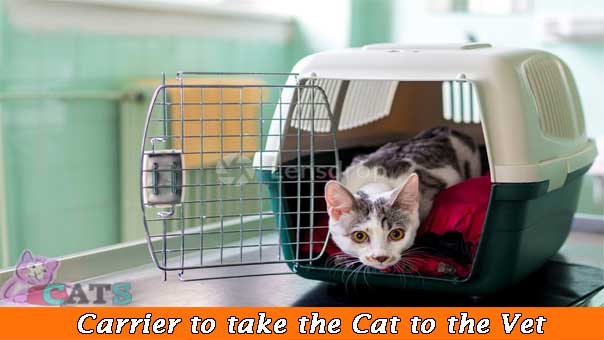 Carrier to take the Cat to the Vet