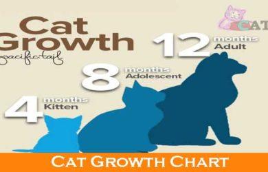 Cat Growth Chart