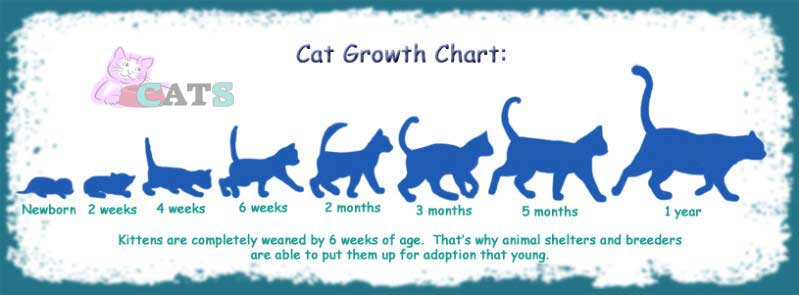 The Growth Of Cats
