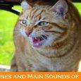 Cat Noises