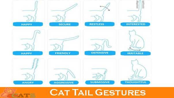 Cat Tail Gestures