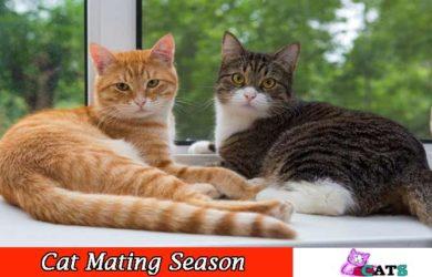 Cats Mating season