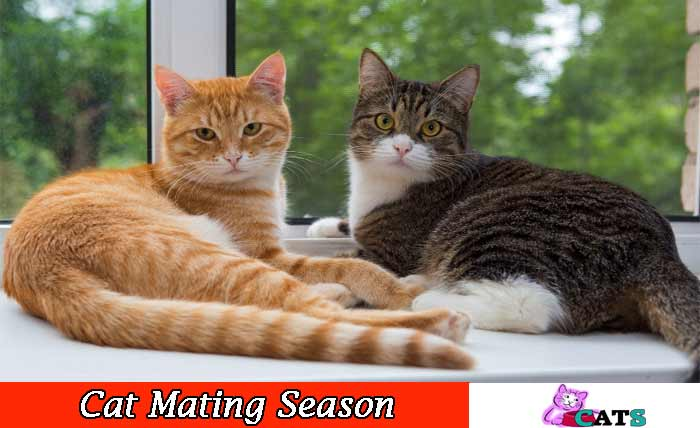 Cats Mating season