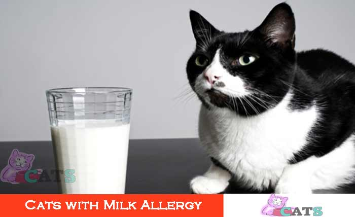 Cats with Milk Allergy