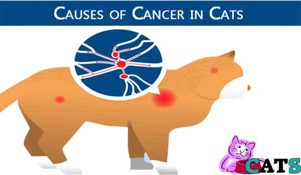 Causes of Lymphoma in Cats