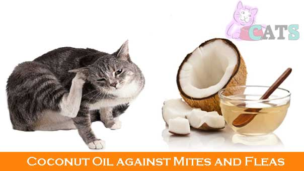 Coconut Oil against Mites and Fleas