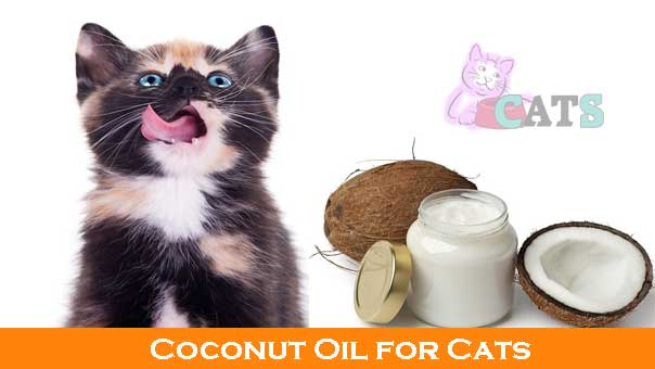 Coconut Juice and How it Affects Cats There are two kinds of liquid which can be taken from a coconut. The first is coconut juice, which is similar to water and is obtained by breaking a coconut.