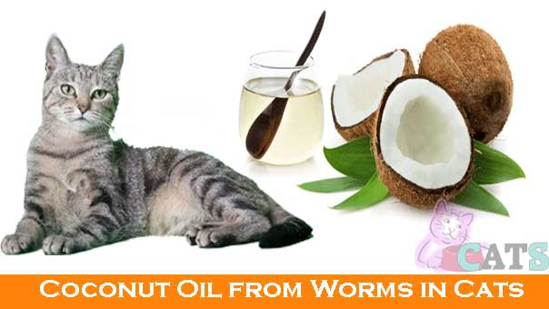 Coconut Oil from Worms in Cats