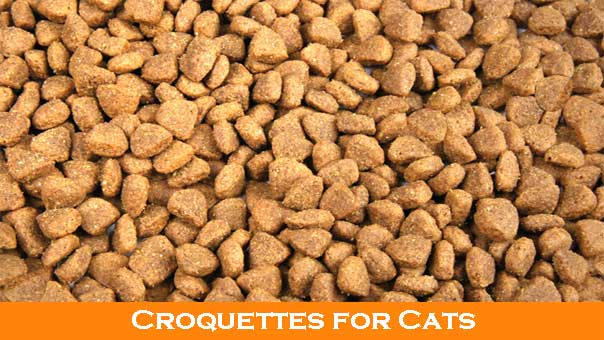 Homemade cat food and raw cat food diets recipes benefits and more homemade raw cat food forumfinder Choice Image