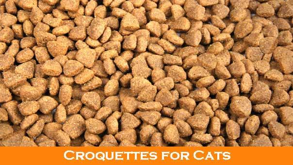 homemade raw cat food
