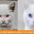albino cats