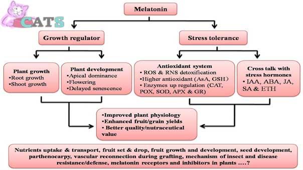 Effect of Melatonin