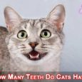 How Many Teeth Do Cats Have??