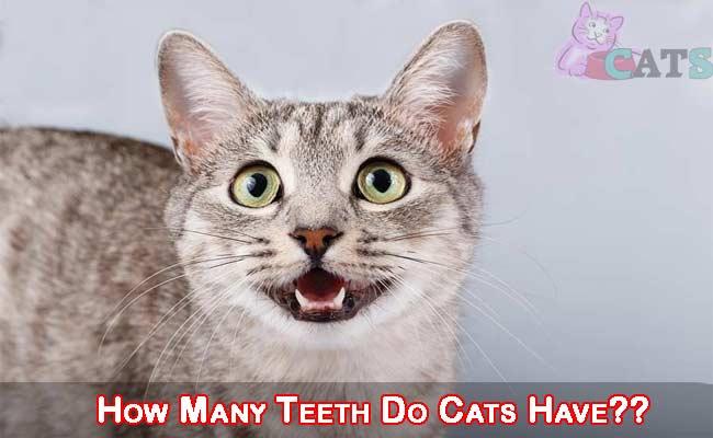How Many Teeth Do Cats Have??
