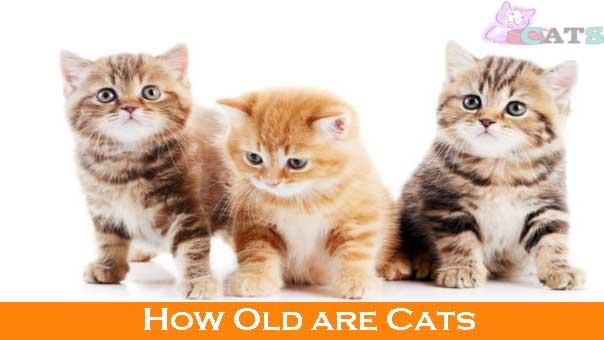 kitten growth chart weight