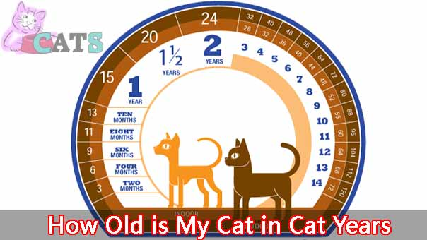 How Old is My Cat in Cat Years