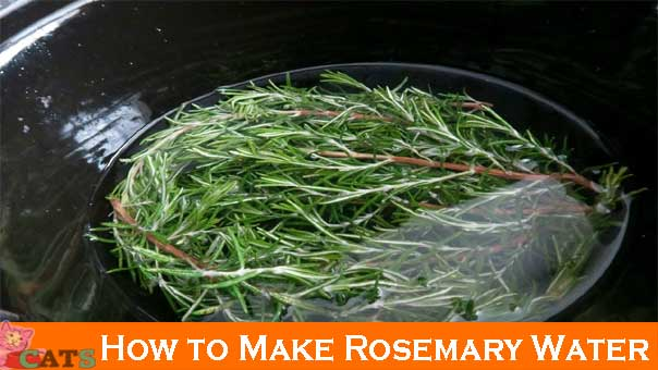 How to Make Rosemary Water