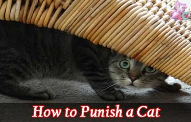 How to Punish a Cat