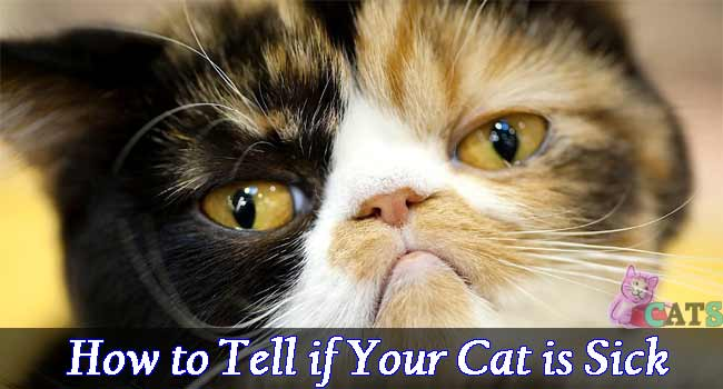 How to Tell if Your Cat is Sick