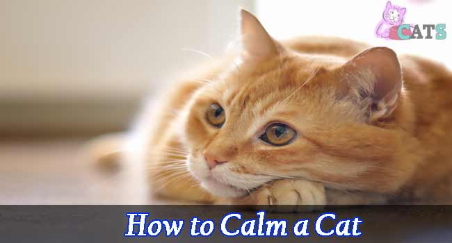 How to calm a cat